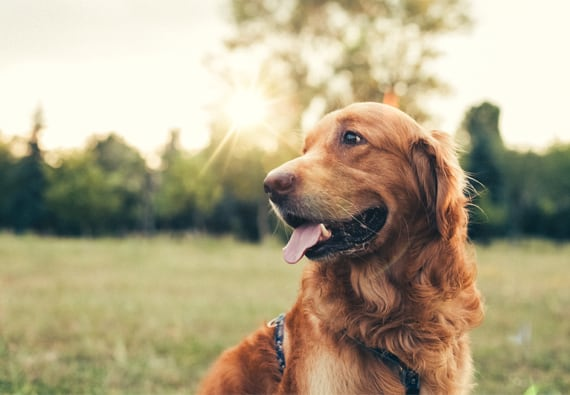 Best Oral Flea Medicine for Dogs