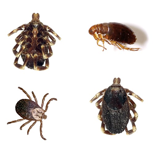 How to Get Rid of Ticks | Updated for 2021