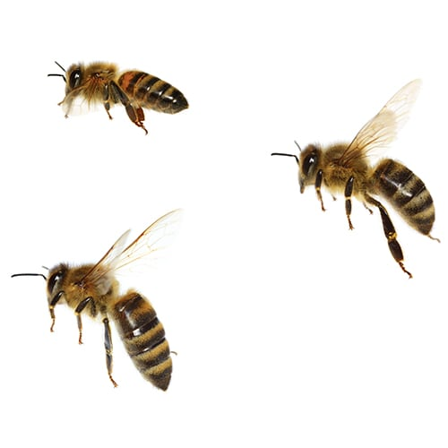 Know The Type Of Bee