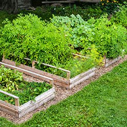 Raised Plant Beds