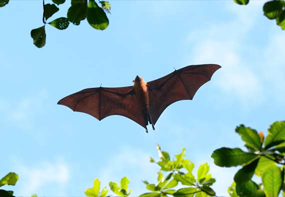 Where do Bats Live and Sleep?